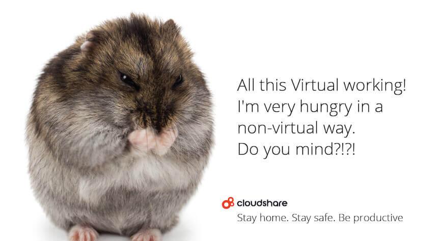 remote working virtual training hamster